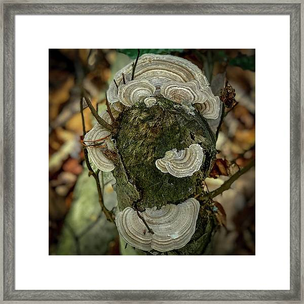 Another Fungus Framed Print