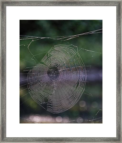 Another Web Framed Print