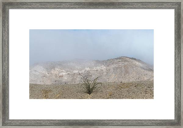 Anza-borrego Ocotillo Framed Print