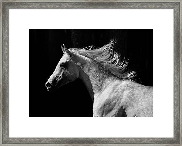 Arab Stallion Framed Print by Photographs By Maria Itina