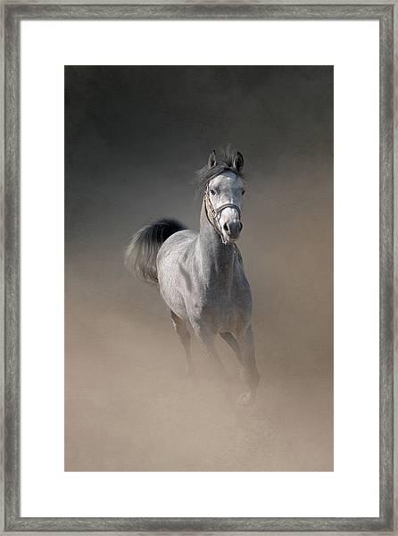 Arabian Horse Running Through Dust Framed Print by Christiana Stawski