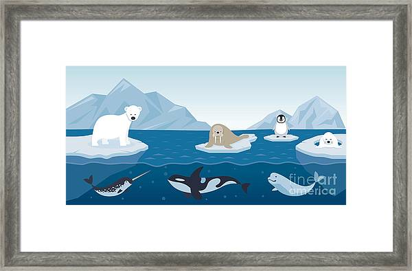 Arctic Animals Character And Framed Print