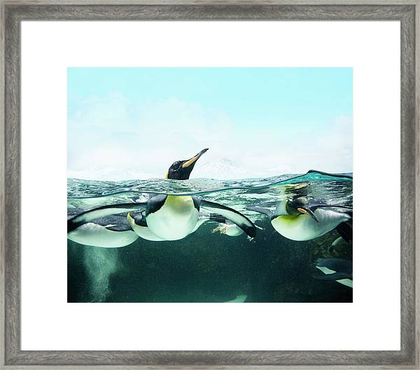 Arctic Penguins Framed Print