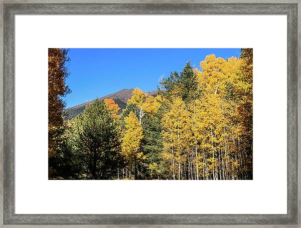 Arizona Aspens With Mountains Framed Print