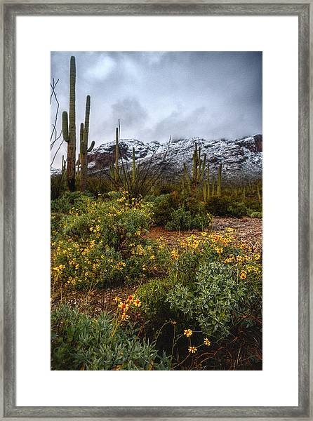 Arizona Flowers And Snow Framed Print