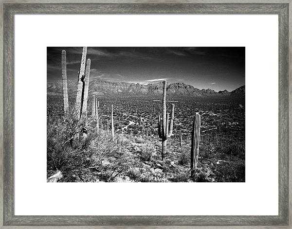 Arizona, Tucson, Saguaro Np, Brown Framed Print