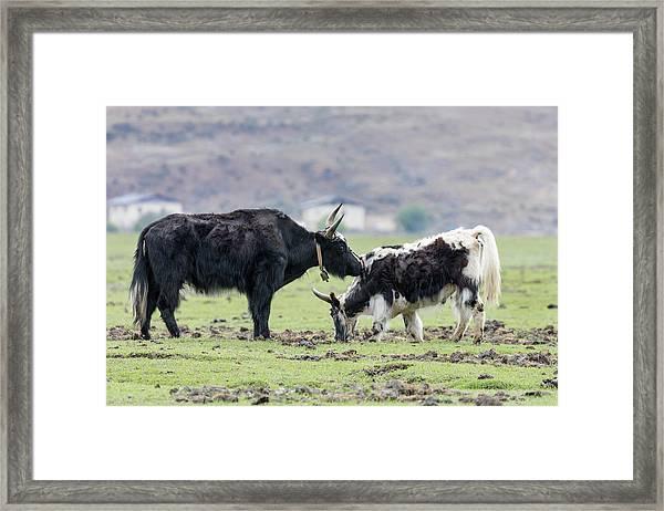 Asia, China, Yunnan Province Framed Print by Ellen Goff