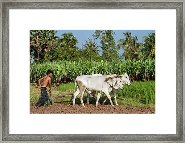 Asian Young Farmer Working The Field Framed Print
