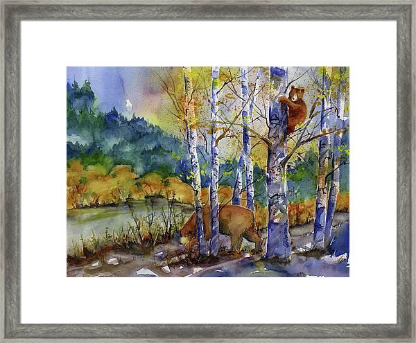 Aspen Bears At Emmigrant Gap Framed Print