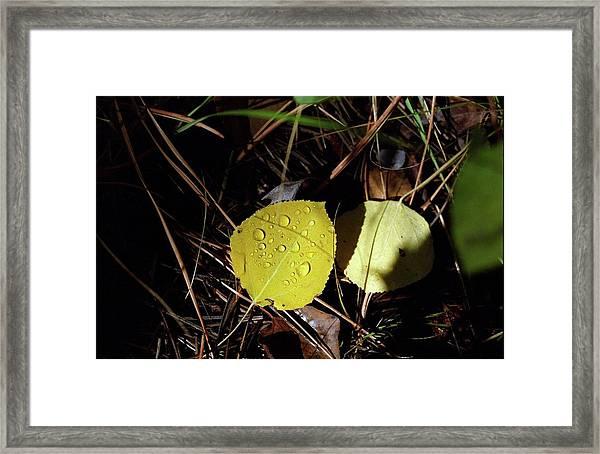 Aspen Dew Framed Print