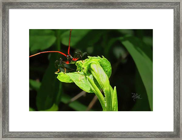 Assassin Bug Framed Print