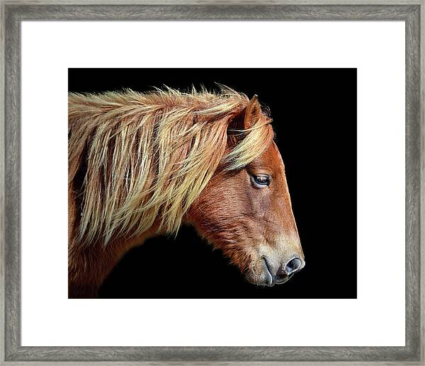 Assateague Pony Sarah's Sweet Tea Portrait On Black Framed Print