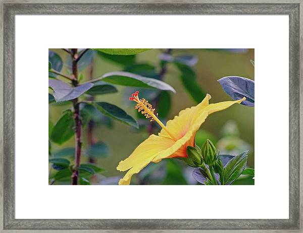 Attention Framed Print by Gillis Cone