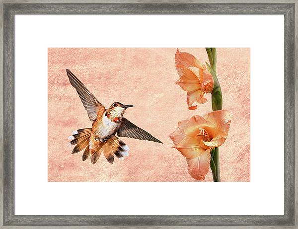 Attraction  Framed Print