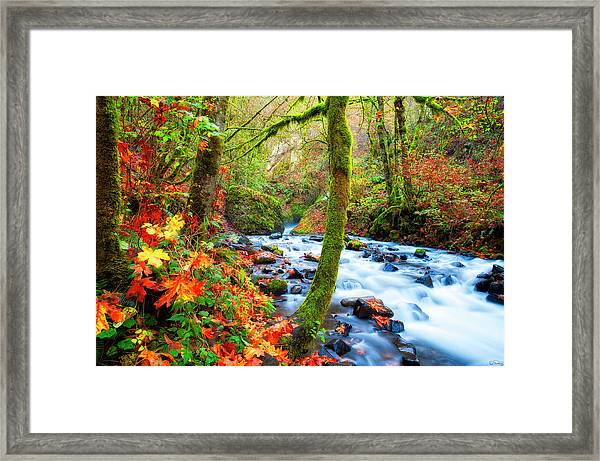 Framed Print featuring the photograph Autumn Along Bridal Veil Creek Columbia River Gorge by Dee Browning