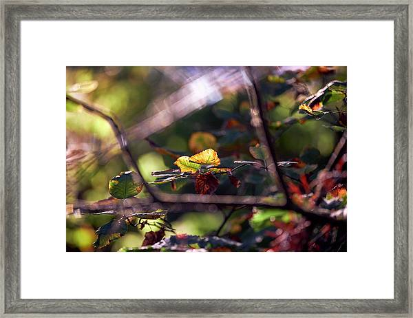 Framed Print featuring the photograph Autumn Beginnings by Whitney Goodey