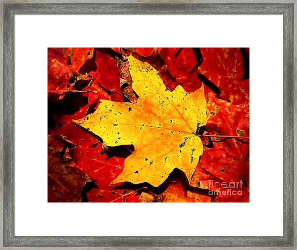 Autumn Beige Yellow Leaf On Red Leaves Framed Print