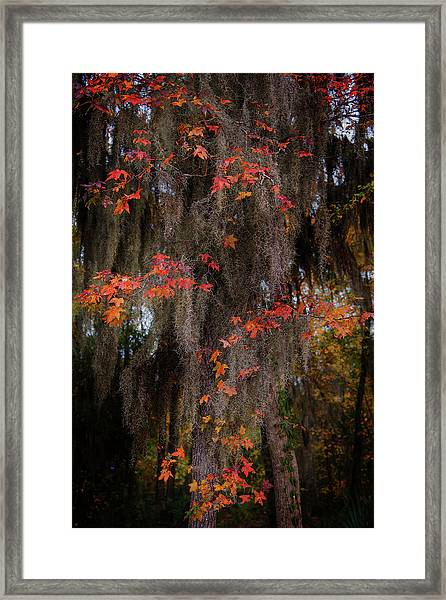 Autumn Color In Spanish Moss Framed Print