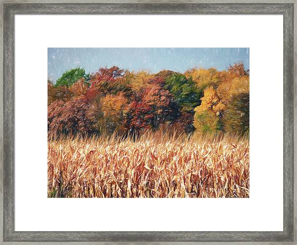 Autumn Cornfield Framed Print