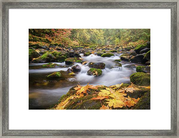 Framed Print featuring the photograph Autumn Creek by Nicole Young
