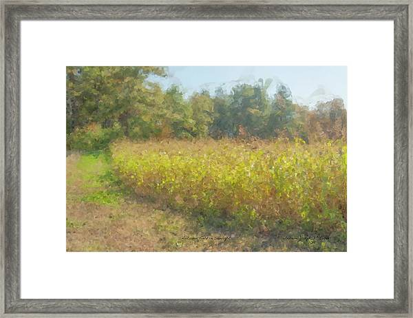 Autumn Field In Sunlight Framed Print