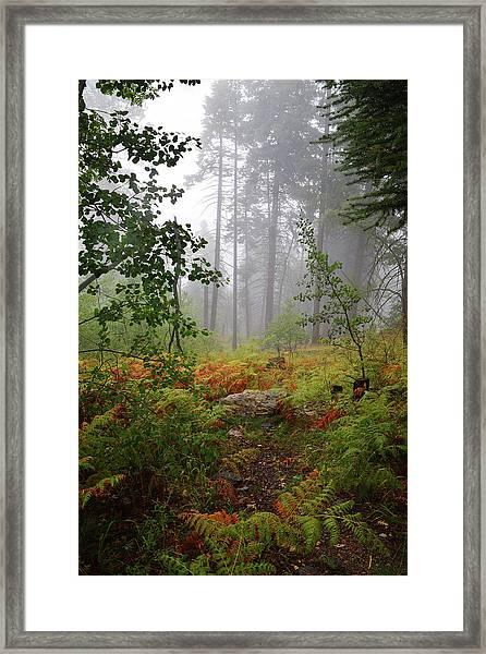 Autumn Fog  Framed Print
