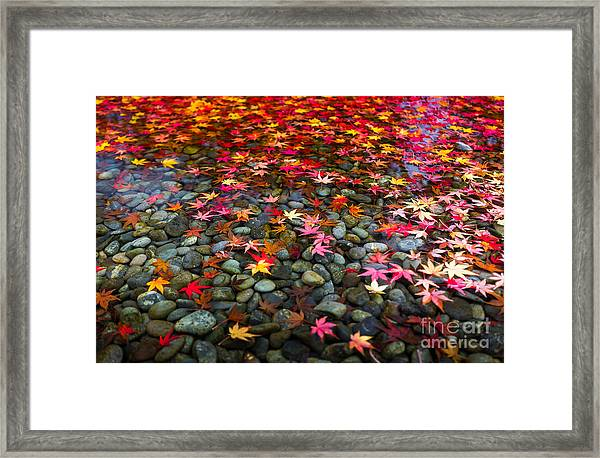 Autumn Foliage In Japan Framed Print