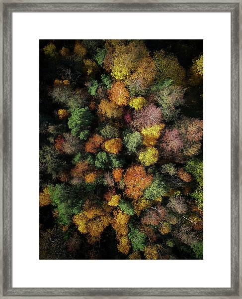 Autumn Forest - Aerial Photography Framed Print