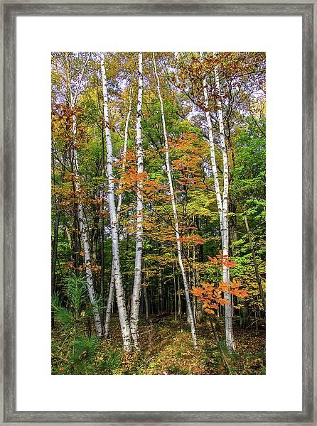 Autumn Grove, Vertical Framed Print