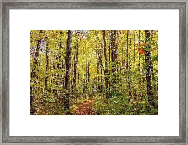 Framed Print featuring the photograph Autumn Hike by Dawn Richards