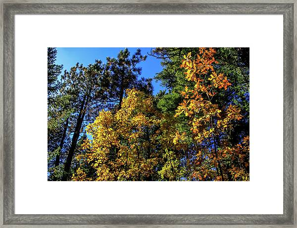 Framed Print featuring the photograph Autumn In Apache Sitgreaves National Forest, Arizona by Dawn Richards