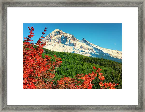 Framed Print featuring the photograph Autumn In Lolo Pass Mt. Hood National Forest by Dee Browning