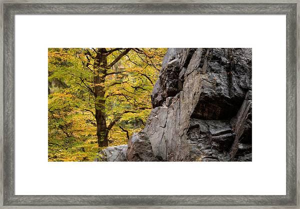 Rock 'n' Tree Framed Print by Dalibor Hanzal