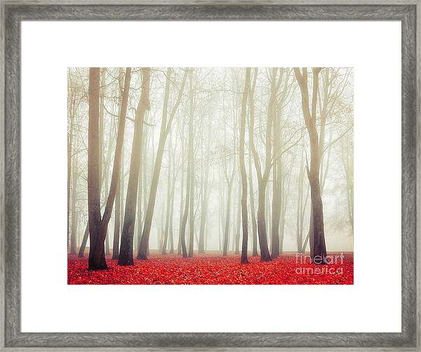Autumn Landscape With Tall Bare Trees Framed Print