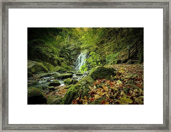 Autumn Leaves At Glenoe II Framed Print