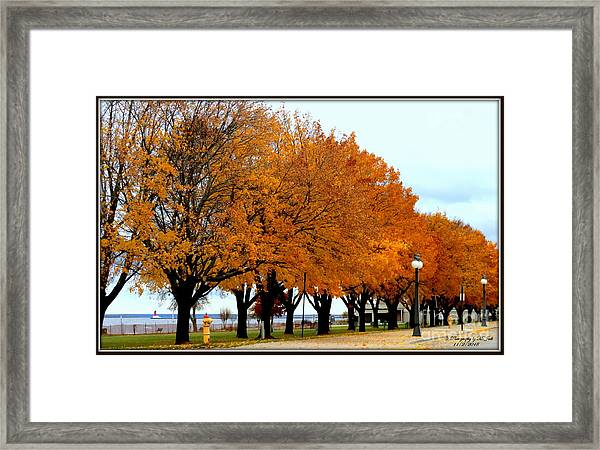 Autumn Leaves In Menominee Michigan Framed Print
