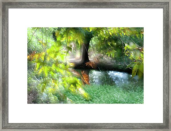 Autumn Leaves In The Morning Light Framed Print