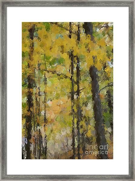Autumn Light Framed Print by David Boudreau