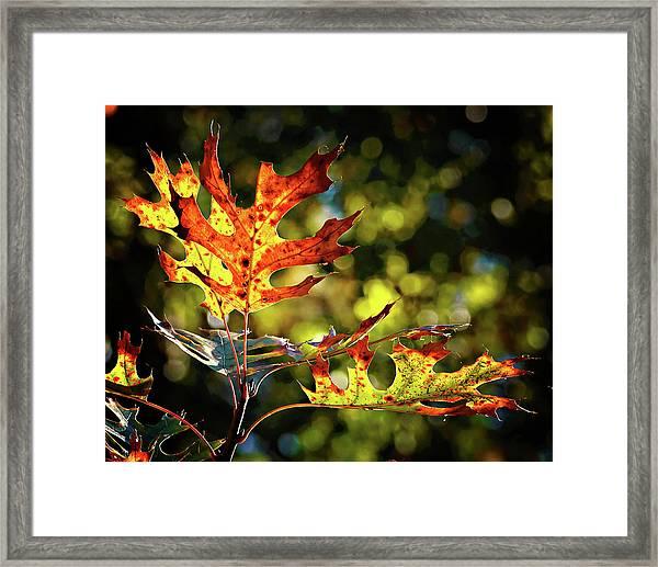 Autumn Mosaic Framed Print