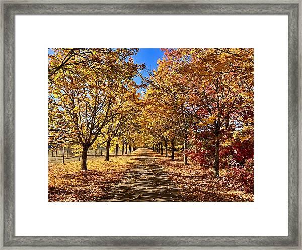 Autumn Road Framed Print