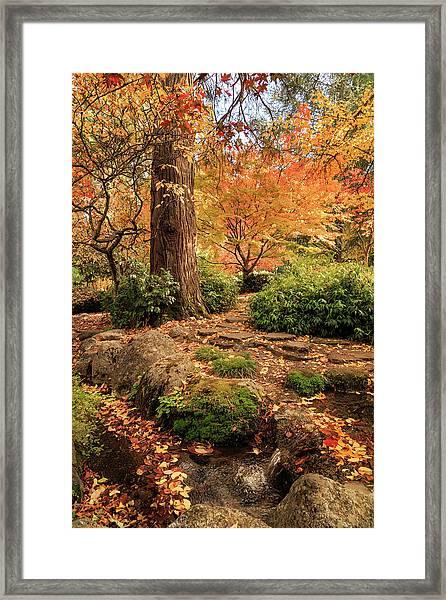 Autumn Stream In Lithia Park Framed Print
