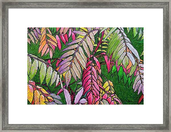 Autumn Sumac Framed Print