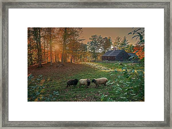 Autumn Sunset At The Old Farm Framed Print
