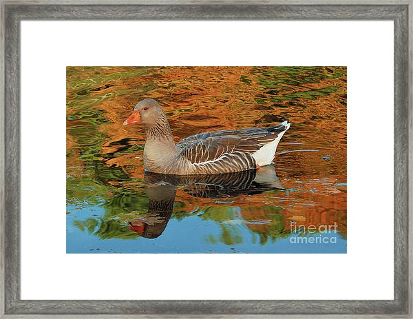 Autumn Swim Framed Print