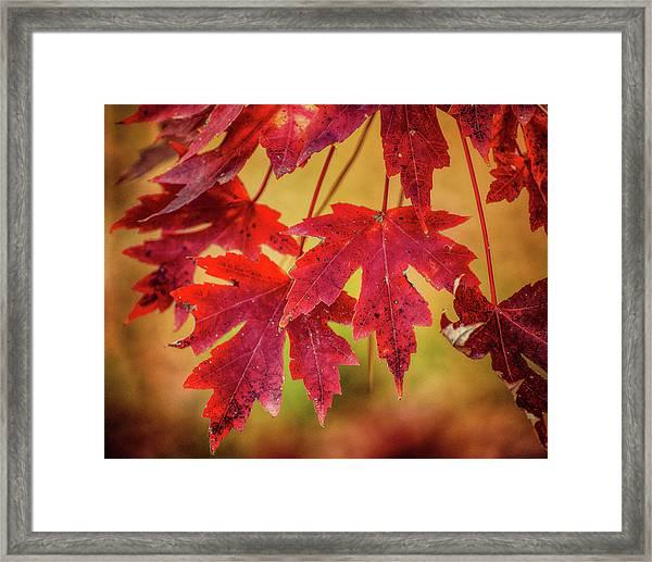 Autumn Watch Framed Print