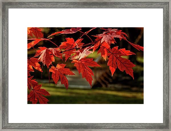 Autumn Whispers  Framed Print