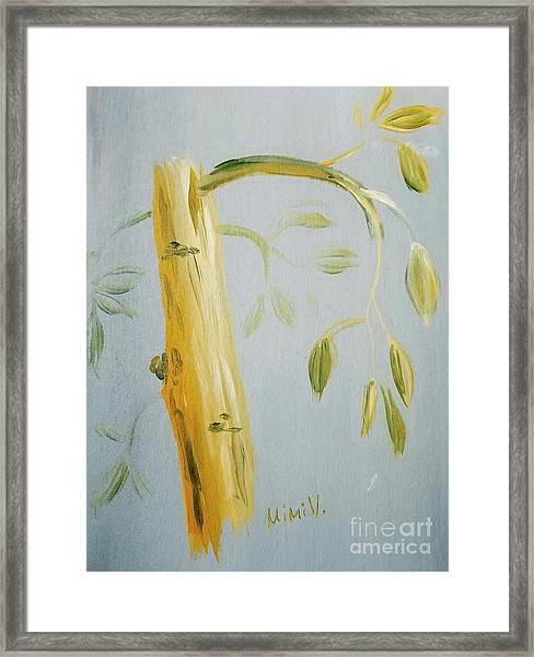 Avocado Tree  Framed Print