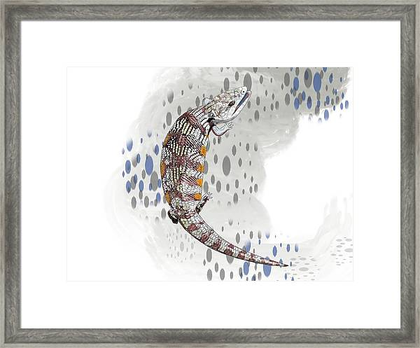 B Is For Blue Tongue Lizard Framed Print