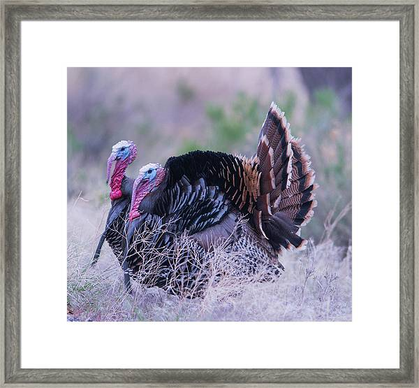 Framed Print featuring the photograph B11 by Joshua Able's Wildlife