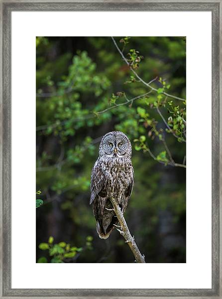 Framed Print featuring the photograph B16 by Joshua Able's Wildlife